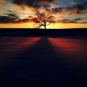 "From the project called ""That Tree,"" a photo of this tree each day for a year with the iPhone"