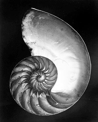 shell 1927
